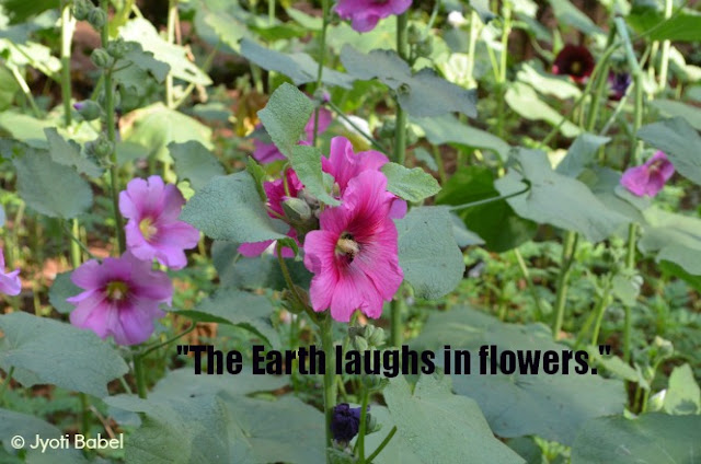 the-earth-laughs-in-flowers