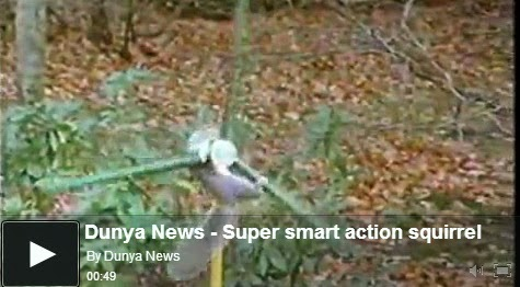 http://funkidos.com/videos-collection/amazing-videos/super-smart-action-squirrel