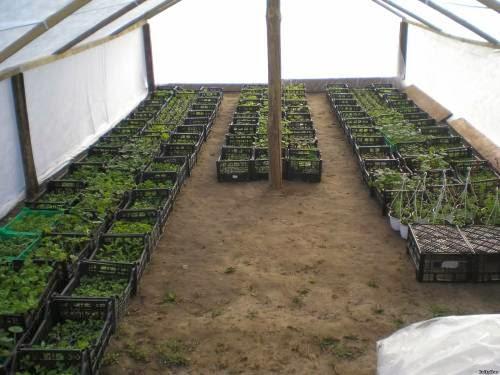 как вырастить рассаду, как закаливать рассаду