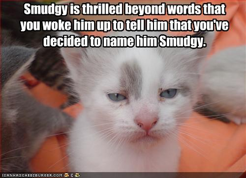 funny cats with words. 2010 really funny pics of cats
