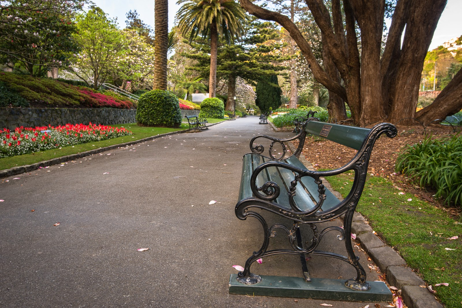 antique seat and tulips Wellington botanic gardens
