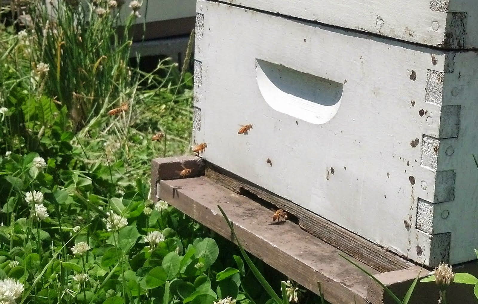 Bon One Of The Hives On The Roof At Christie Webber Landscapes In Chicago