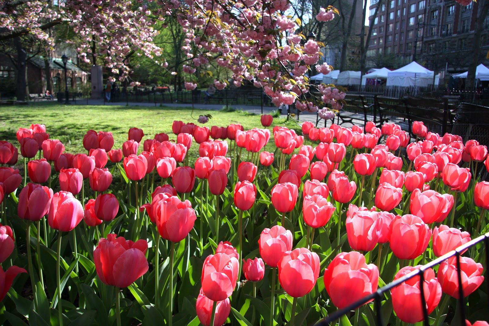 Count Your Blessings t your worries Springtime in Central Park