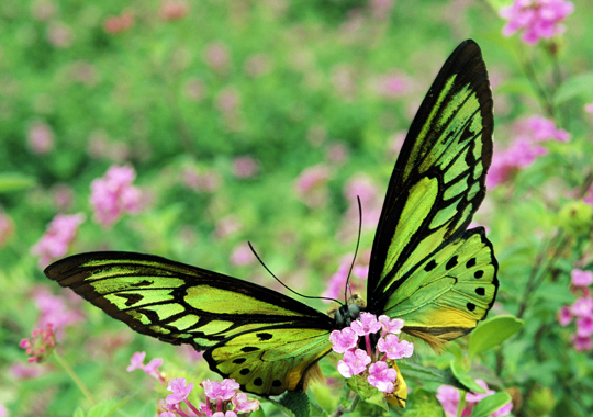 butterfly wallpaper, Colorful butterfly wallpaper, Butterfly wallpaper
