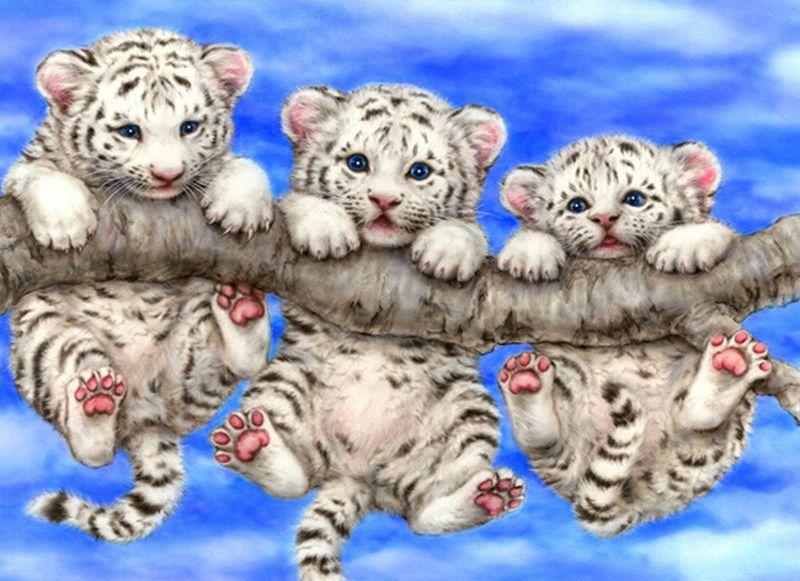 Trzy tygryski