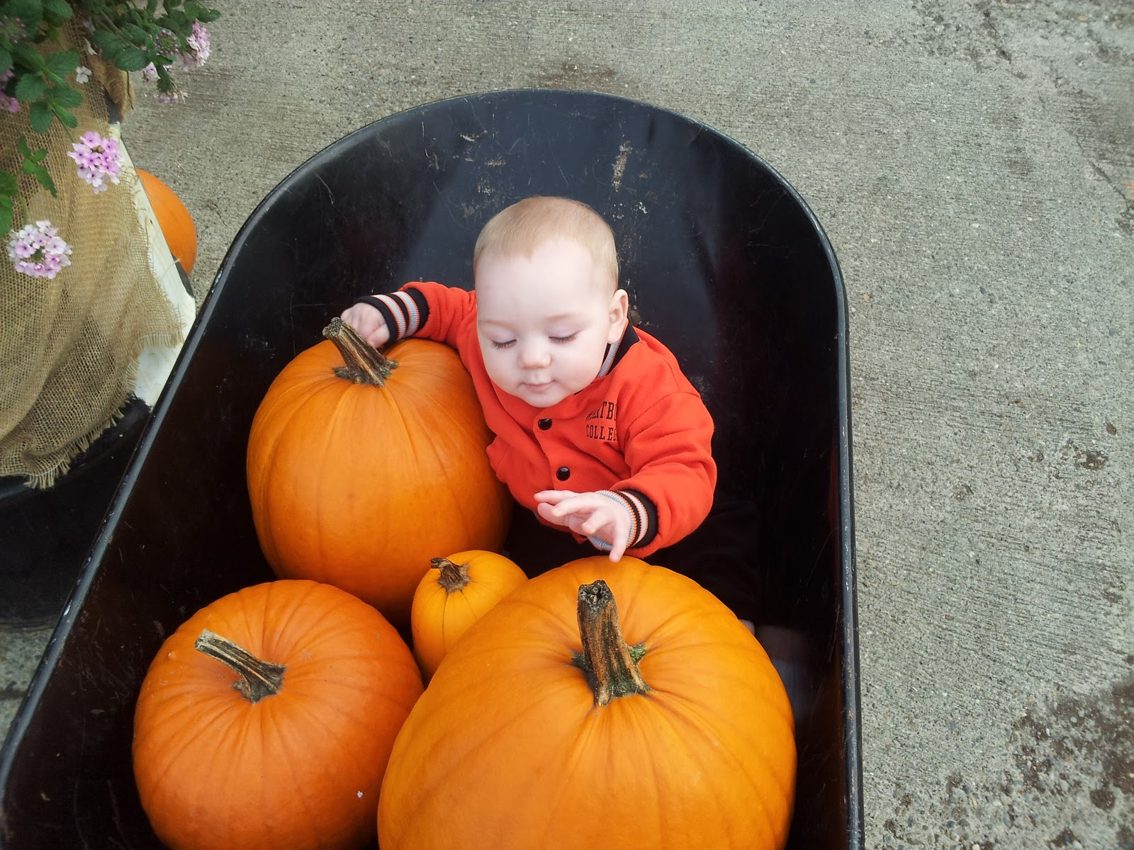 Pumpkin Picking Long Island Dog Friendly