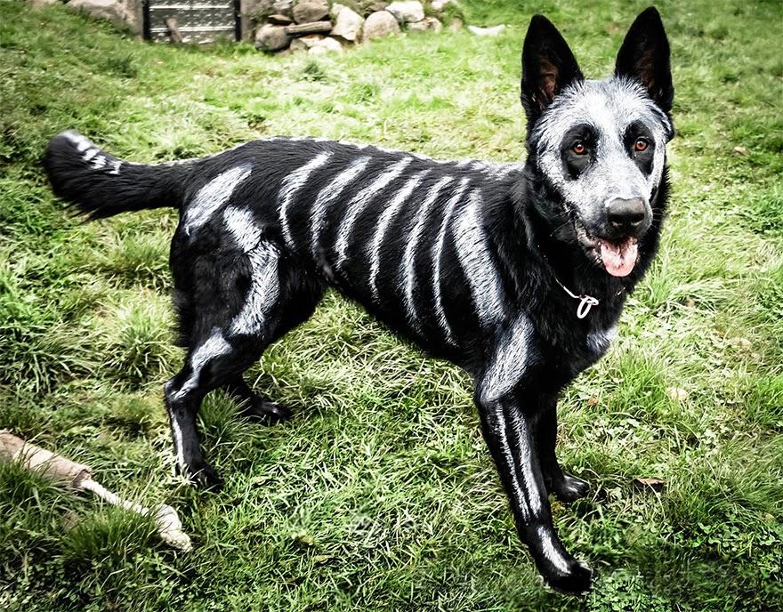 perro transformado en esqueleto con pintura no toxica