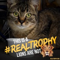 Stop canned lion hunting!