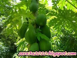 حمل مجاناً كتيب - سلامة الغذاء وعلاقتها بالمحاصيل البستانية