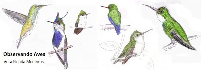 Observando Aves