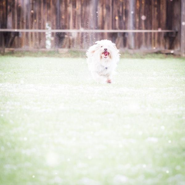Ein glücklicher Hund in den ersten Schneeflocken