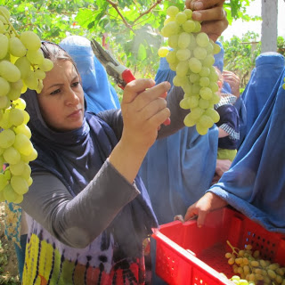 Growing Your Own Grapes Farming Business