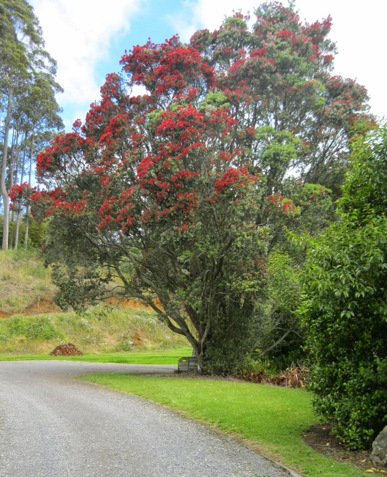 Quiltingorchardist New Zealand Christmas Tree