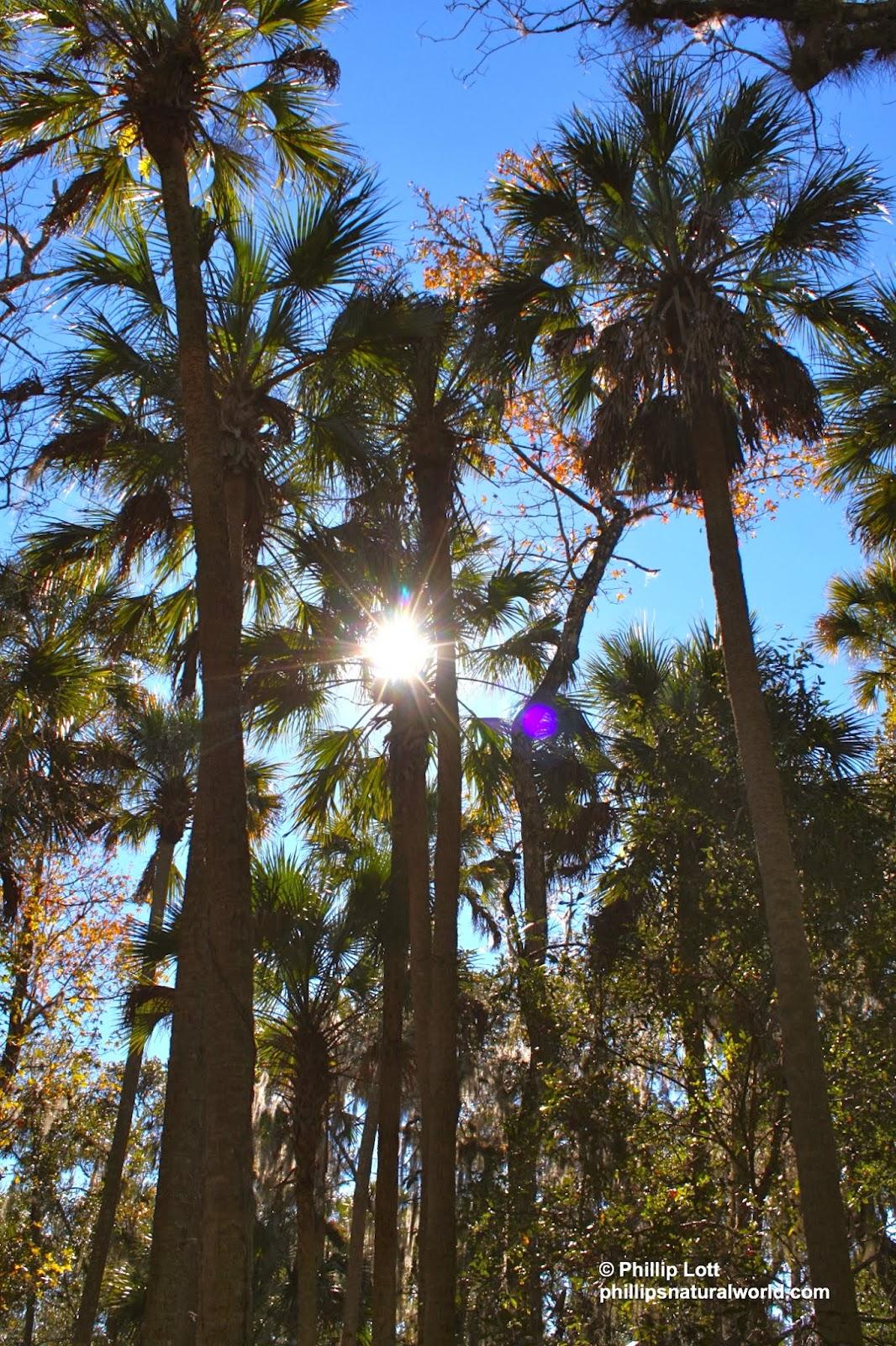 Orange Park Mall >> 238 Florida Manatees - Phillip's Natural World