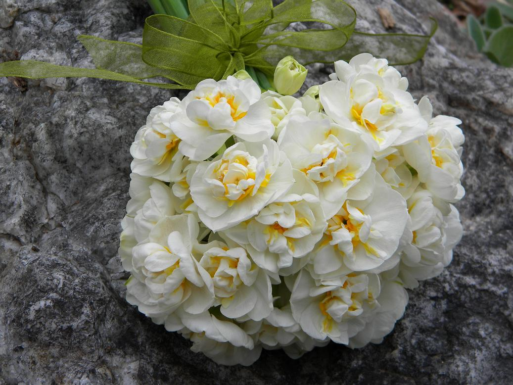 Wedding Flowers from Springwell: What\'s in a Name... Bridal Wreath ...