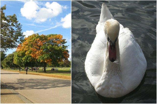 Vista del Parque Hyde Park y cisne en el Lago Serpentine, Londres