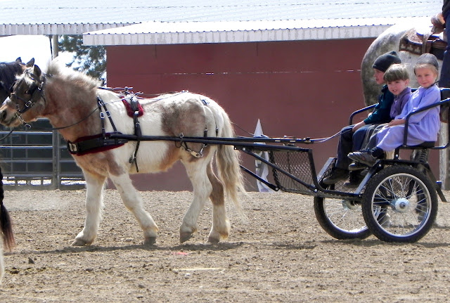 Cat Pulling Wagon : Mules horses and wagons for sale autos post