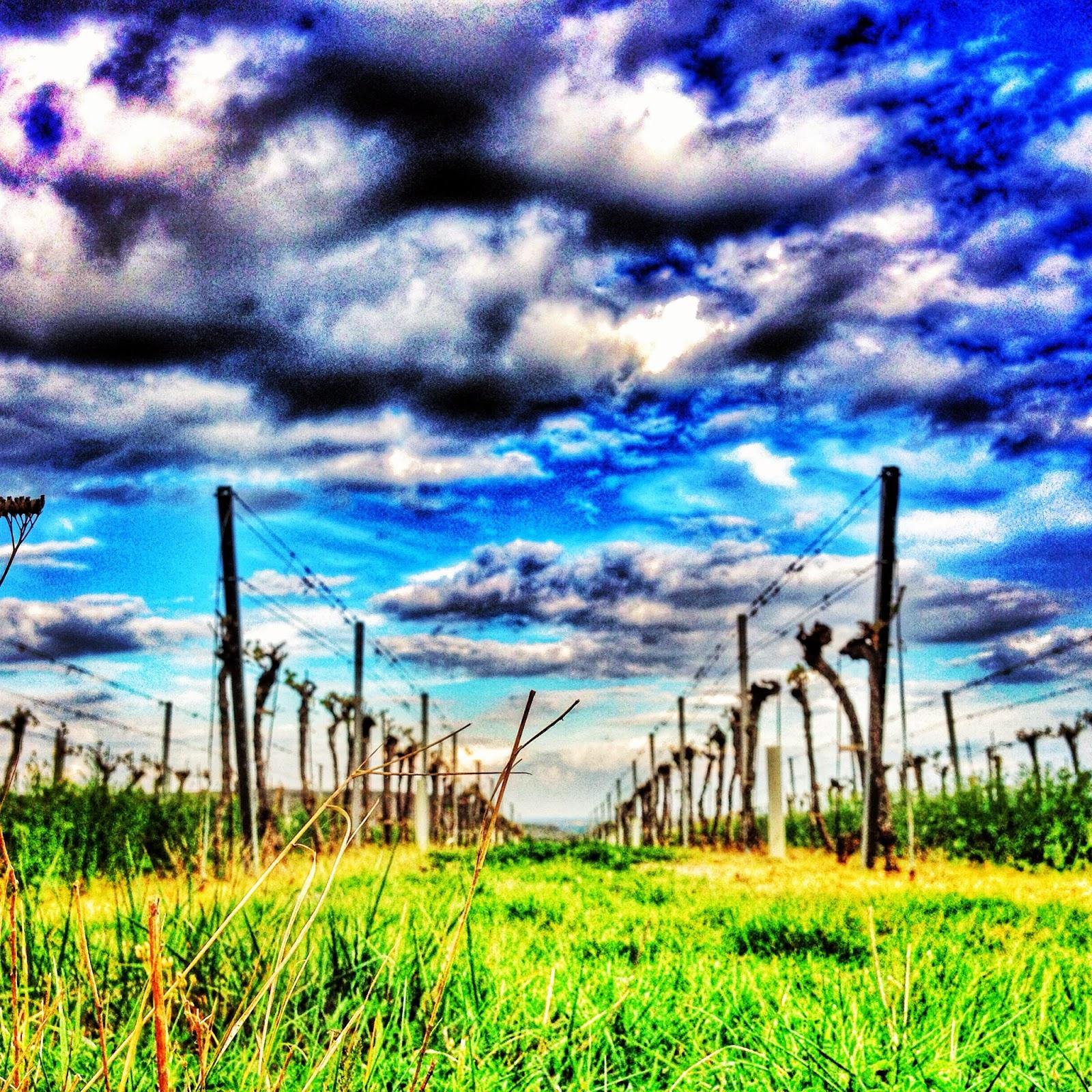 Sommer am Weinzirlberg © Alexandra Wögerbauer-Flicker