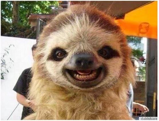 Gambar Haiwan Yang Boleh Buatkan Anda Senyum Bersama