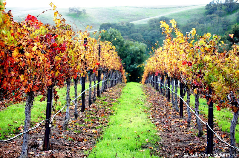 Livermore Valley Vineyards Northern California Weekend Getaway