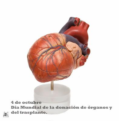 El 4 e octubre se celebre el día mundial de la donación de órganos y del trasplante