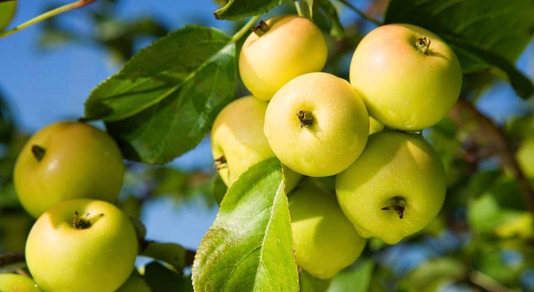 Concepto de usufructo en la antigua roma derecho romano for Arbol con raices y frutos