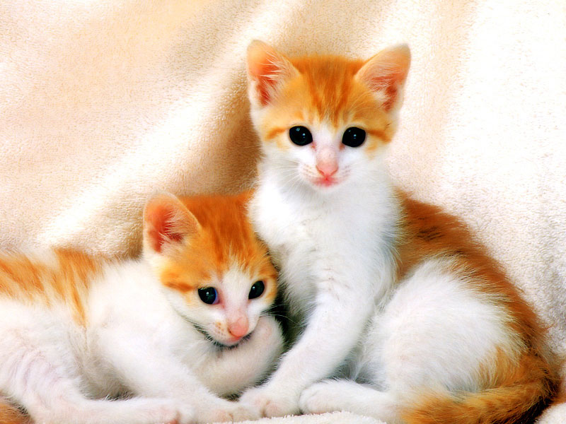 baby cats see