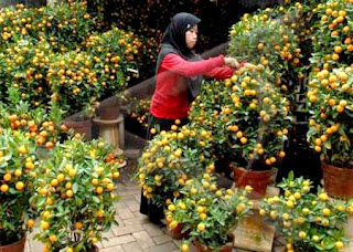 dwarf orange garden