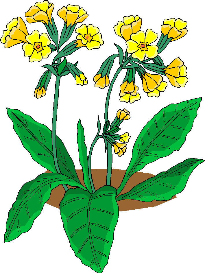 Beautiful Yellow Flowers Free Clipart