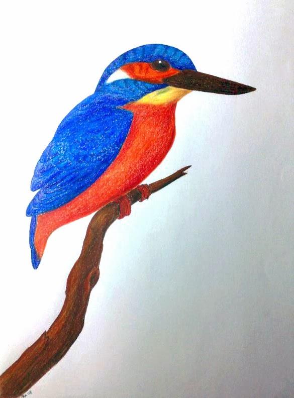 Martin Pescatore Caran d'ache matite colorate su Fabriano