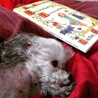 Murchie lays with his head resting on his paws atop a red blanket. His closest ear is flipped back. Behind him is a trade paperback copy of Amy Unbounded by Rachel Hartman. Its cover shows a pale-skinned girl and boy dancing on a tree branch while an anthropomorphic rabbit looks on.