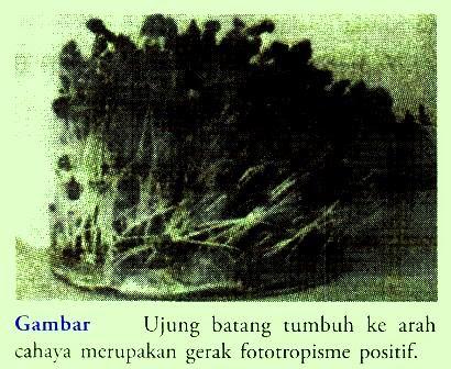 Macam-Macam Gerak Tumbuhan dan Penjelasannya (Tropisme,Nasti,Taksis)