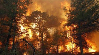 Wildfire in east Texas