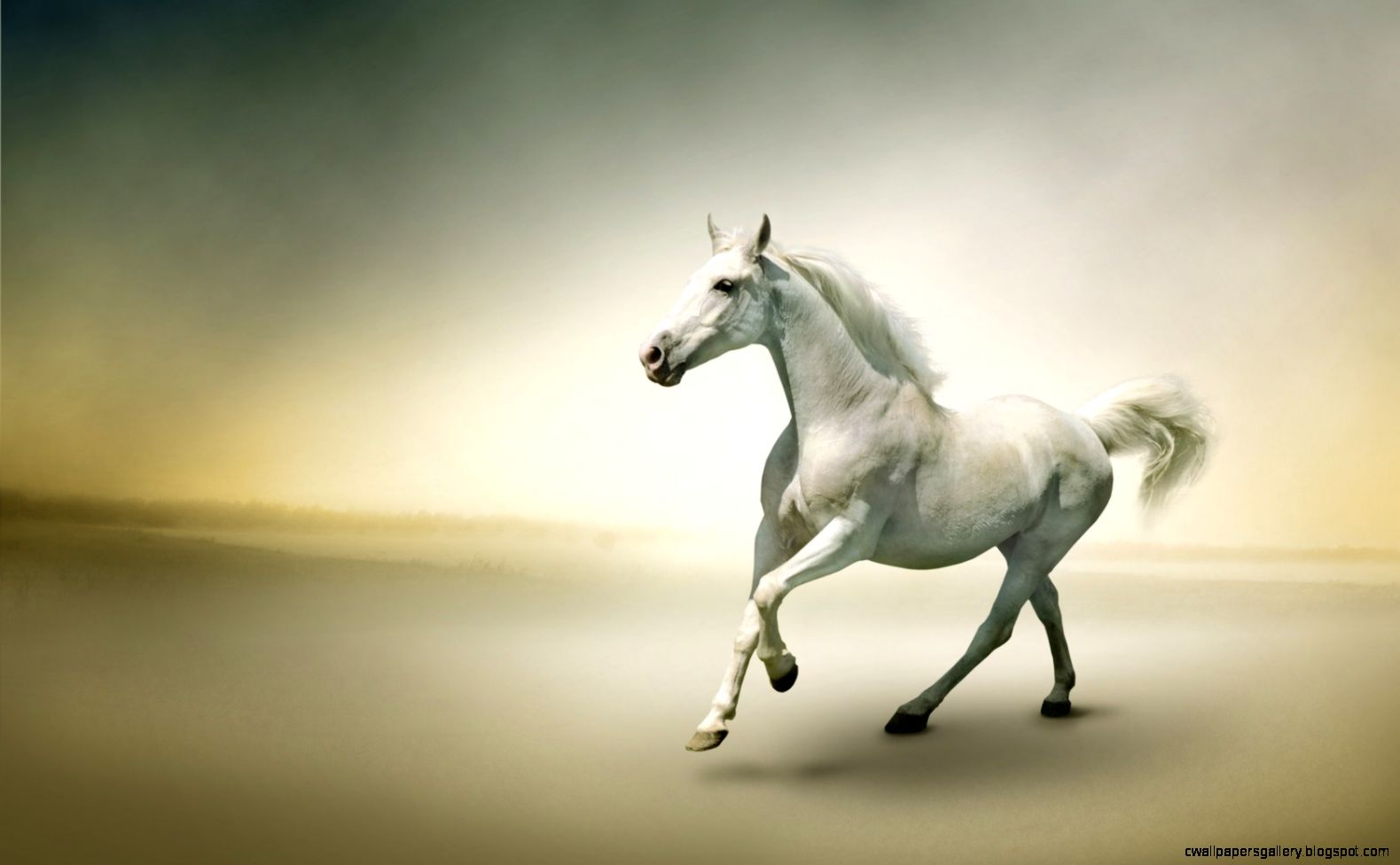 FunMozar – Photo Gallery Beautiful White Horses