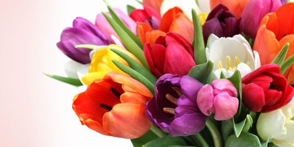 A cobi ada tulipa jardim design - Tulipas para ventiladores de techo ...