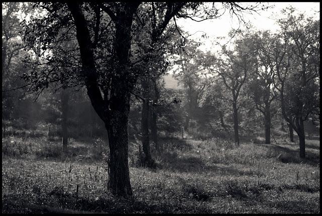 Landschafts bei dem Hohentwiel