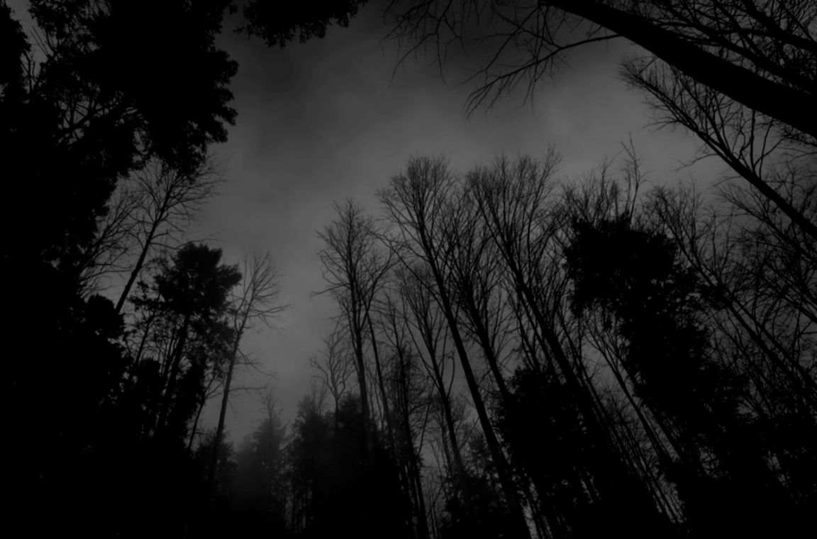 wallpaper on Pinterest  Forest Wallpaper Dark Forest and Forests