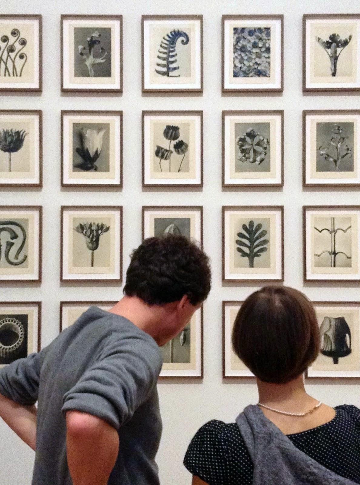 36 plant studies, Karl Blossfeldt