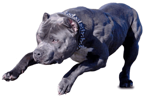 ... 10 Most Dangerous Dog breeds in World - Deadly Vicious   Top 10 Brands
