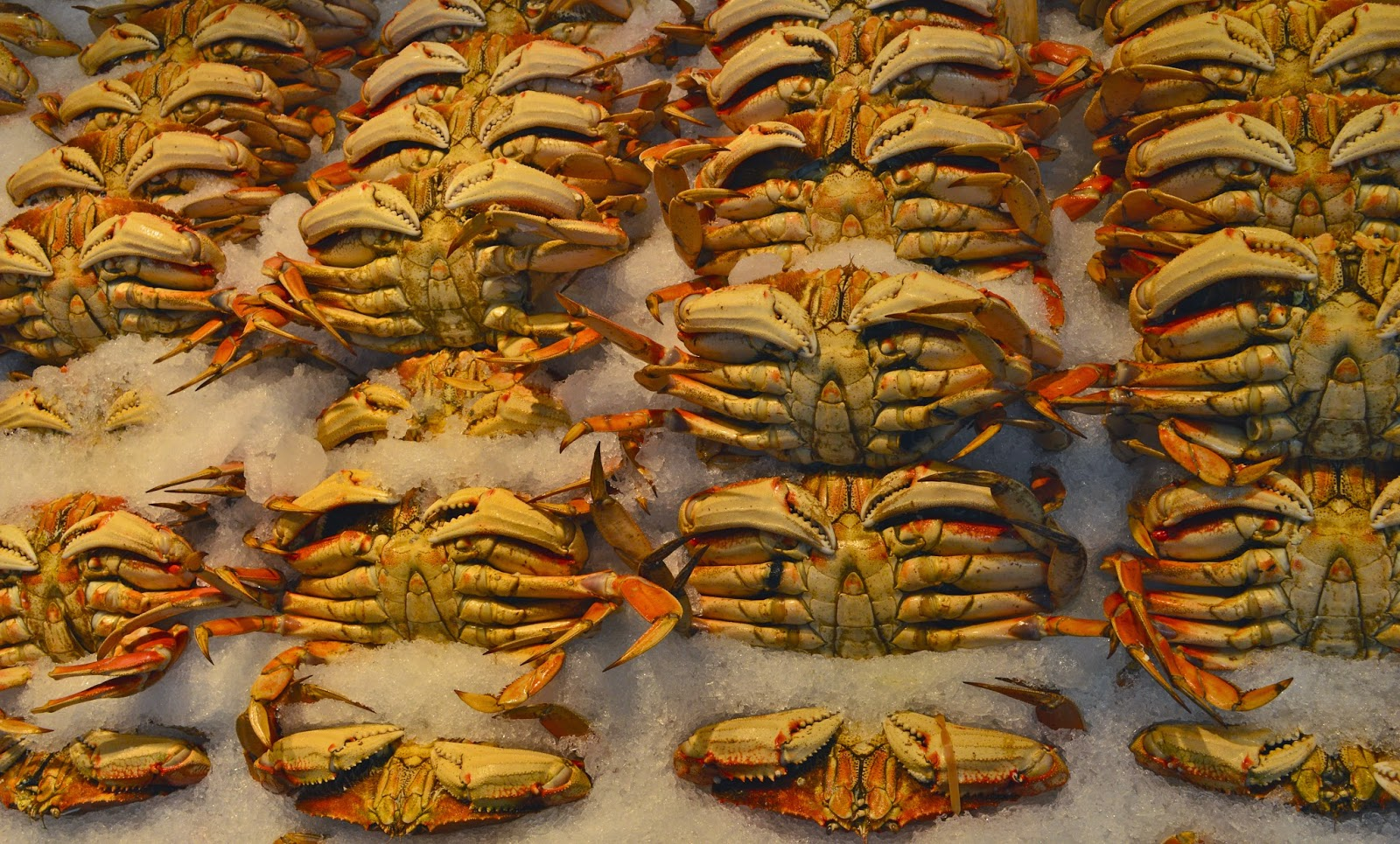 Fresh crabs from Pike Place Fish Market