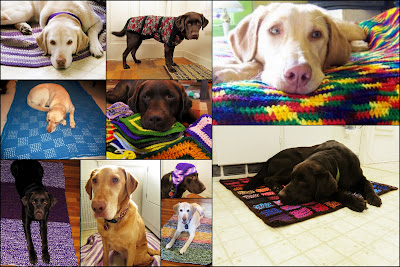 many photos of pale white-yellow Lab Willow, medium red-yellow Lab Stella and dark brown Chocolate Lab Jack enjoying various crochet projects from afghans and rugs to sweaters and hats.