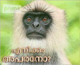 malayalam funny dialogue images - Monkey - Enikkum aparano