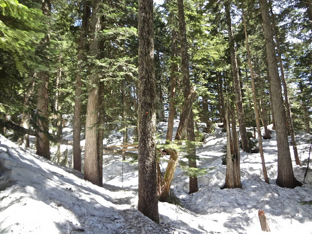 hiking down dog mountain