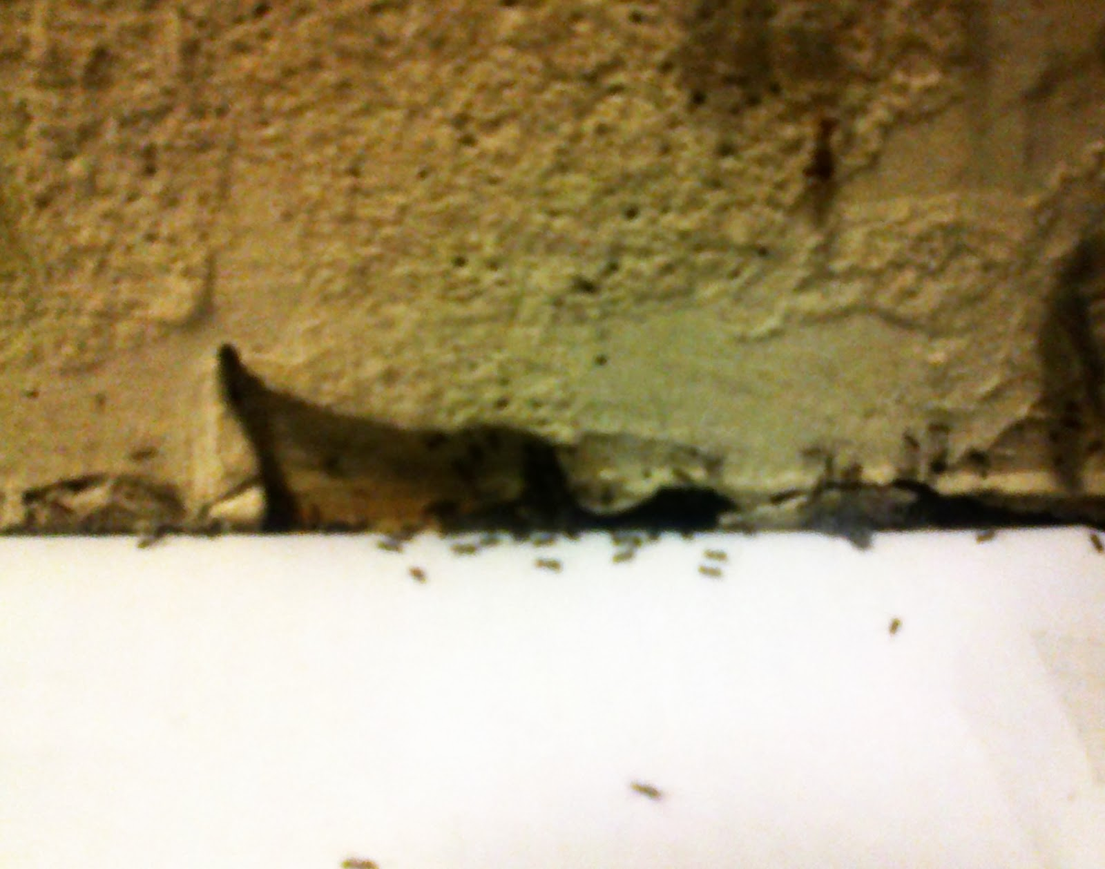 Fourmis dans la maison top sur le ct de ma maison c est - Comment savoir si on a des termites ...