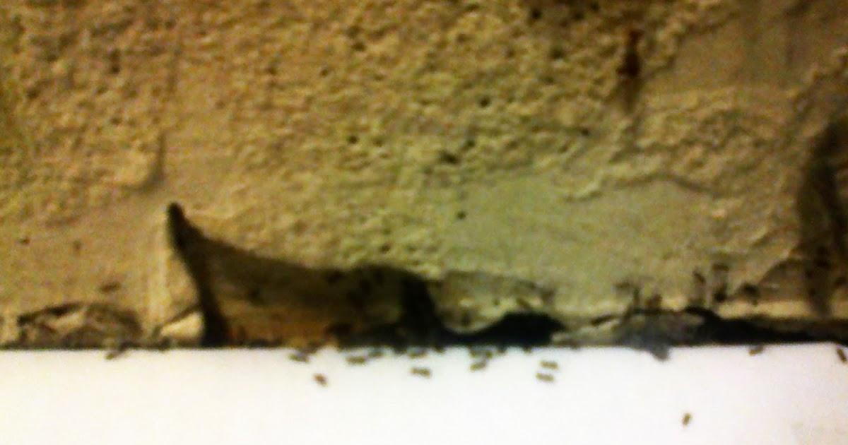 chasser les fourmis emp cher les fourmis d 39 argentine de rentrer dans les maisons. Black Bedroom Furniture Sets. Home Design Ideas