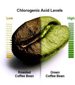 青咖啡豆, 綠咖啡豆, green coffee bean, 減肥, 瘦身