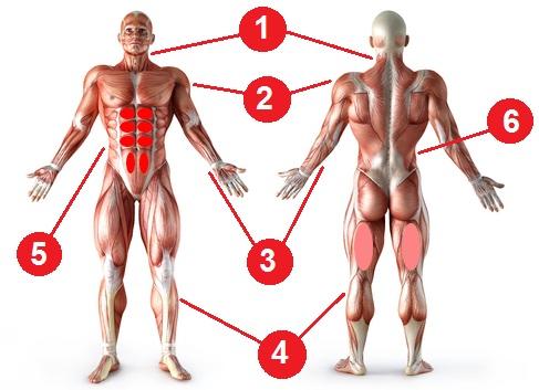 تمرينات عضلات الجسم