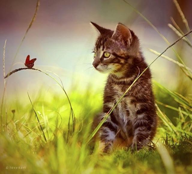 COMEL Koleksi Gambar Kucing Yang Comel Buat Anda Geram 32 Gambar