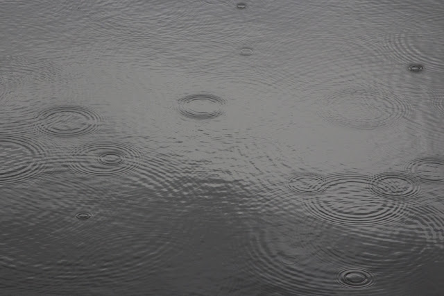 circles of raindrops in water