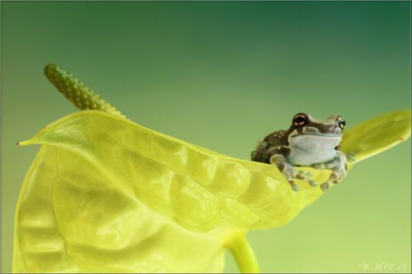Cute Frog Photography by Wil Mijer